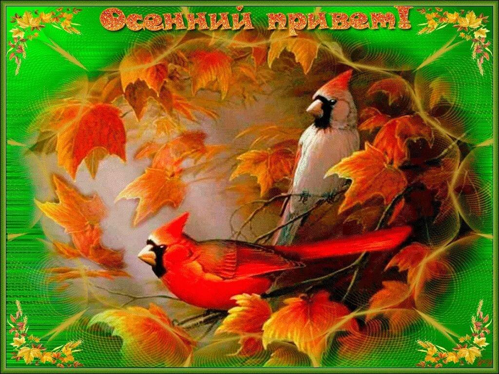 Осенний привет открытки гиф