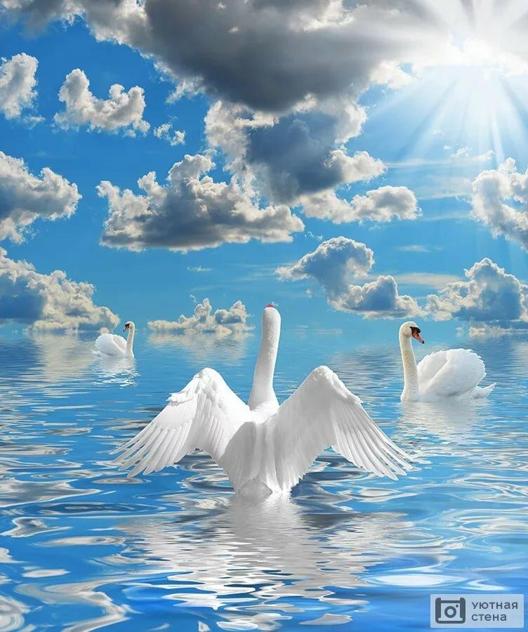 только кодаки картинки одинокая лебедь в небе стене есть