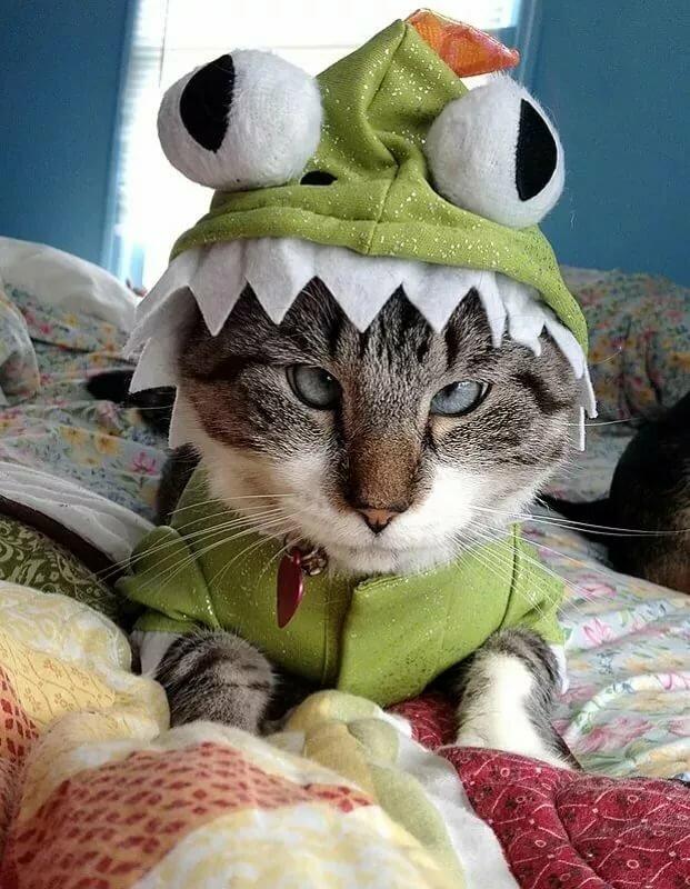 Прикольный котик в картинках, корпоративные открытки наступающим