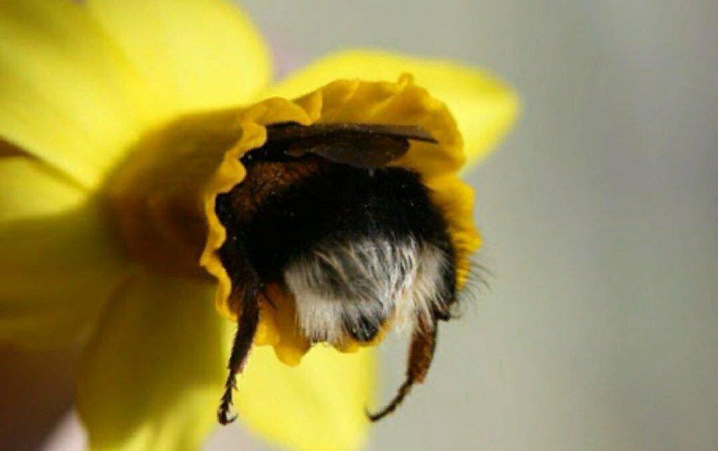 Дню рождения, картинка с пчелами и цветами смешные