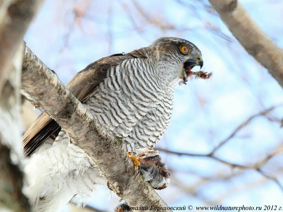 каталог фотографии хищных птиц с названиями разноцветную