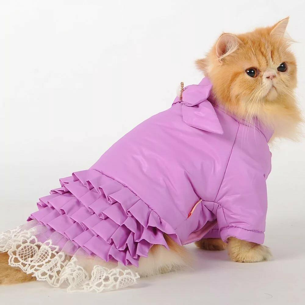 нужно, картинки котята в платьях подходит