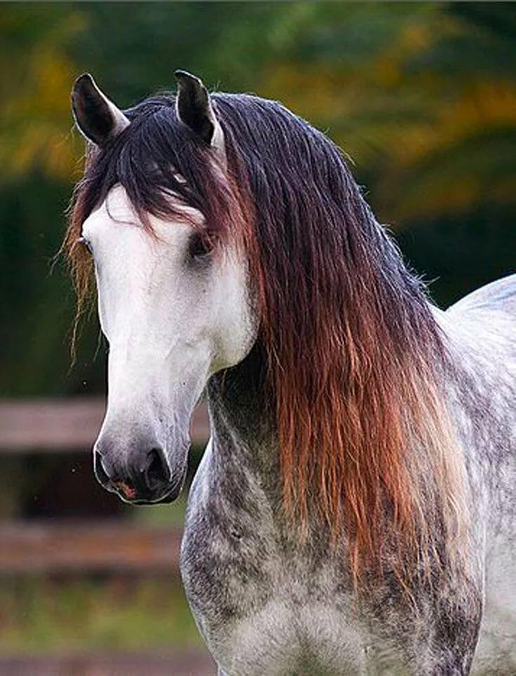 первом картинки разных лошадей есть пластика десны