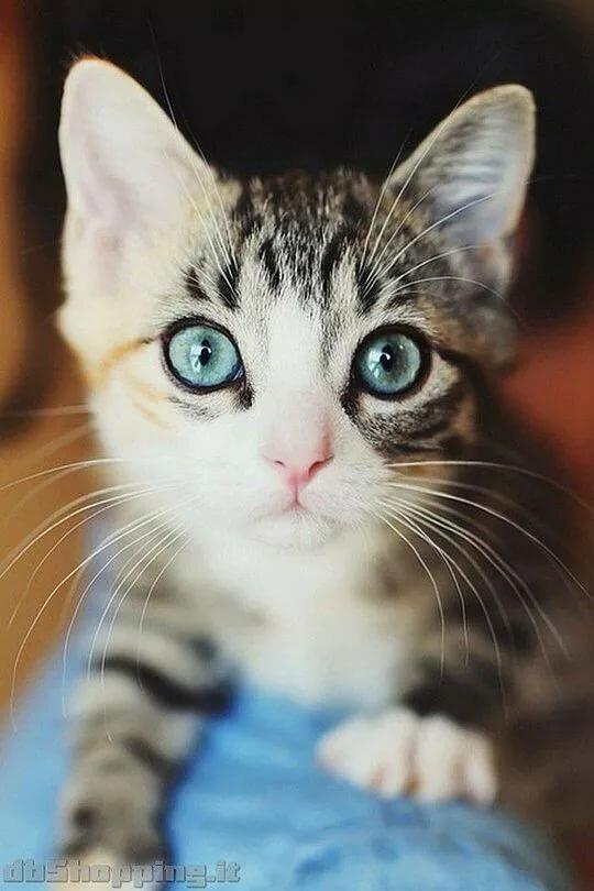 певица фотки котиков на аву в скайпе для пацанов прогулки
