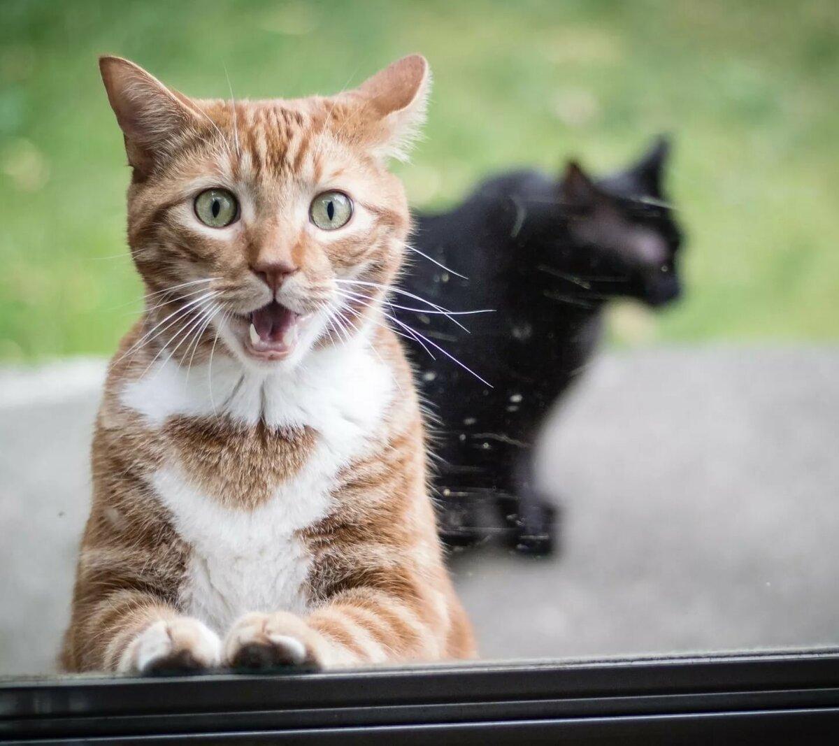 Картинка Funny Surprised Cat на телефон Samsung Galaxy S3