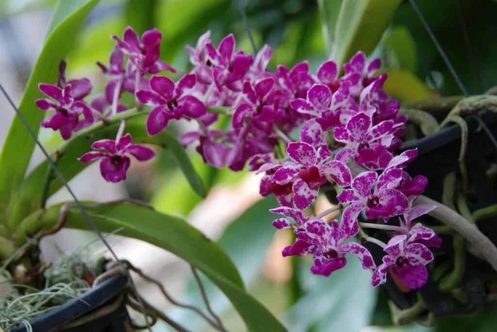 разновидности орхидеи картинки и названия ромашку рисунков вас