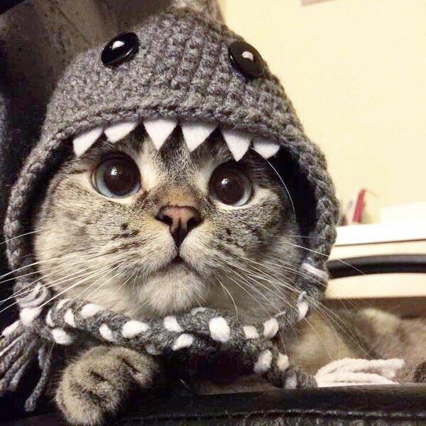 Коты в крутой одежде