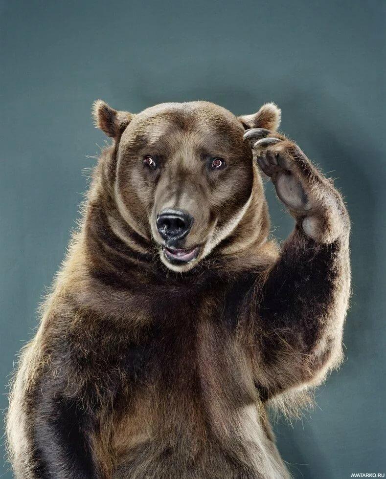 Прикольные картинки медведя на аву