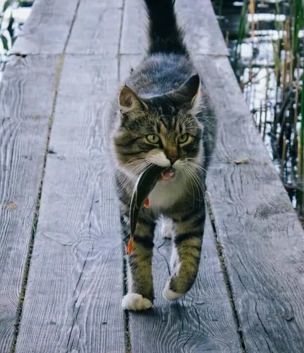 Прикольные котики и киски (50 фото) Из жизни кошачей... Кот,