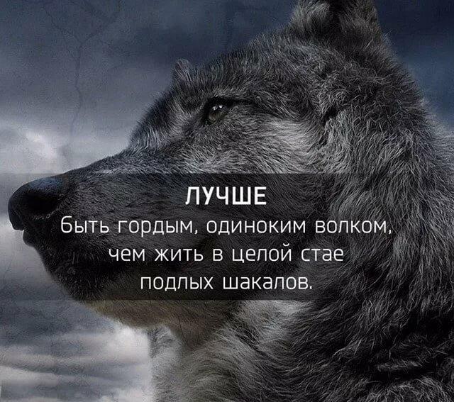 Днем, картинки с волками и надписями про жизнь со смыслом новые зимой