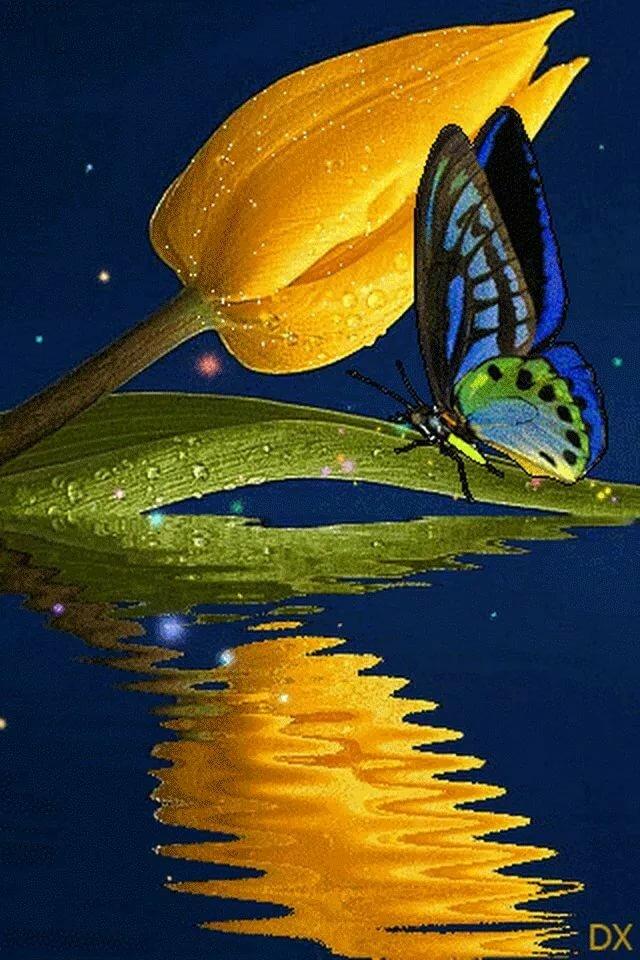 Крым, гифки бабочки на цветах