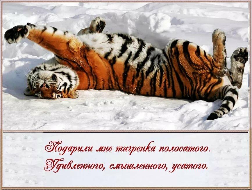 Картинки спокойной ночи тигр мой