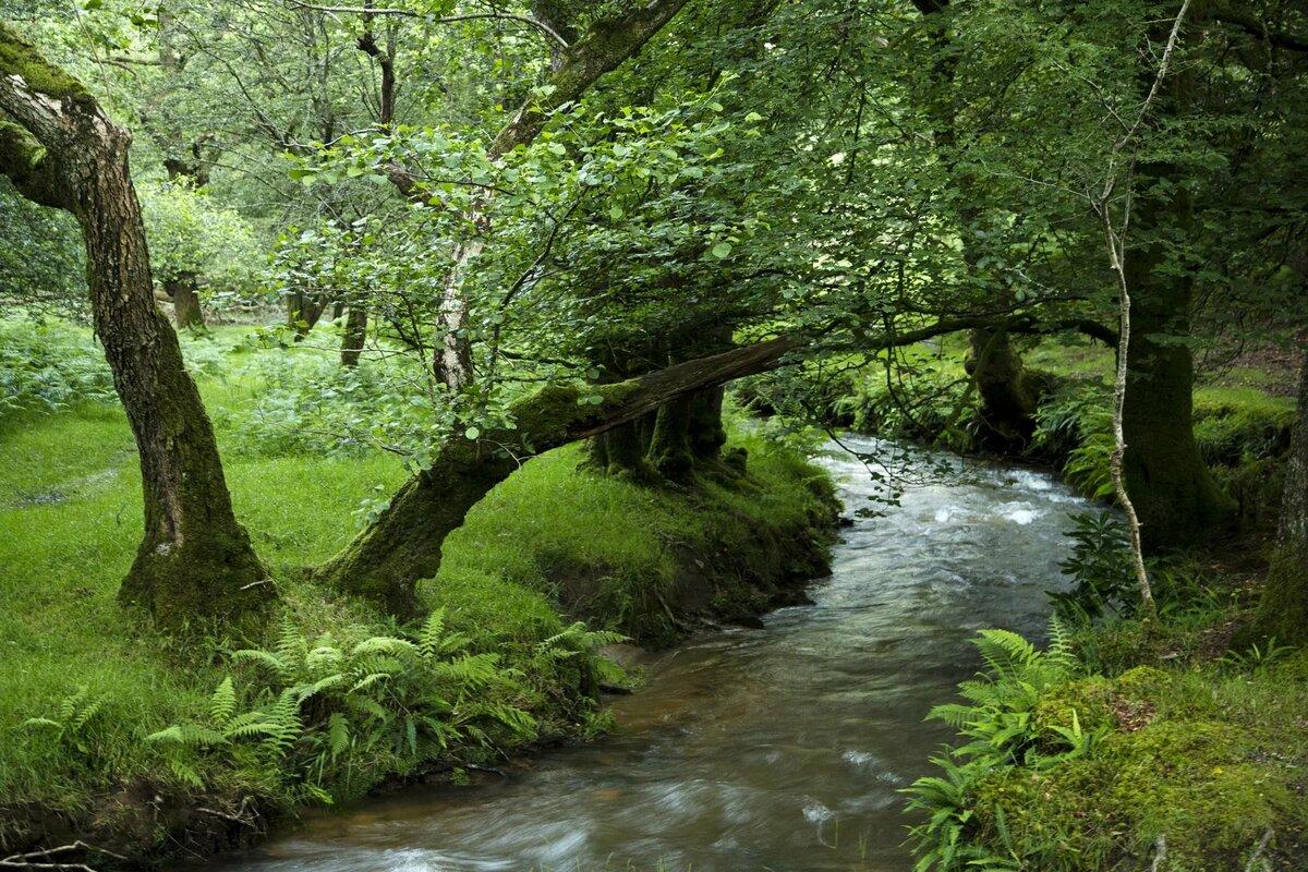позже фото лесных ручьев уважают