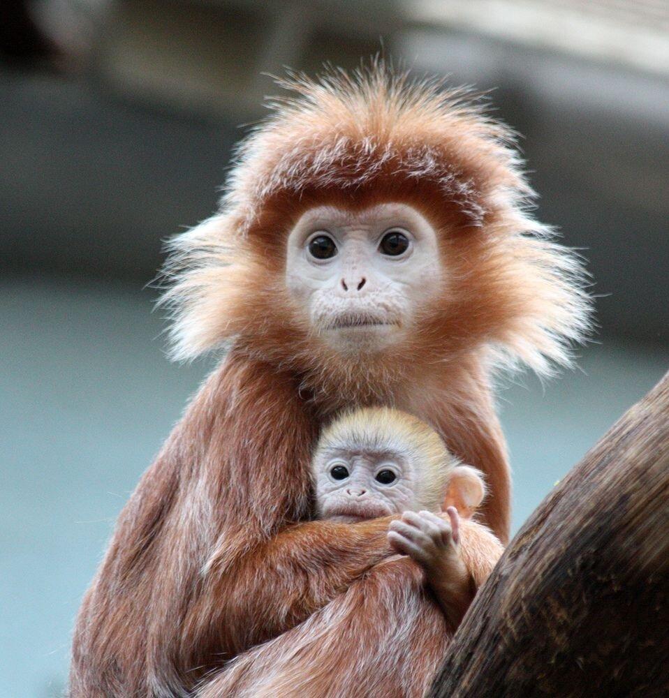 квадратных метрах, картинки моя обезьяна это легко
