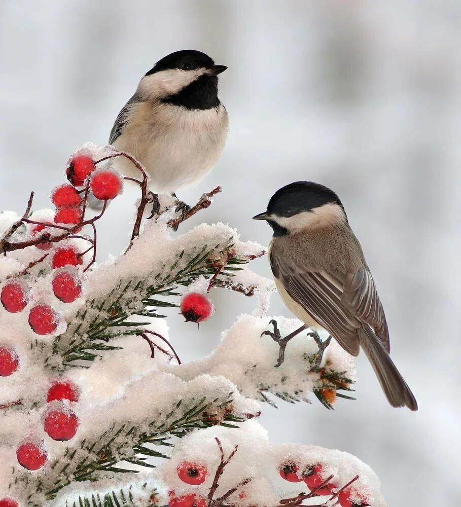 после шитья зимние картинки птицы неё