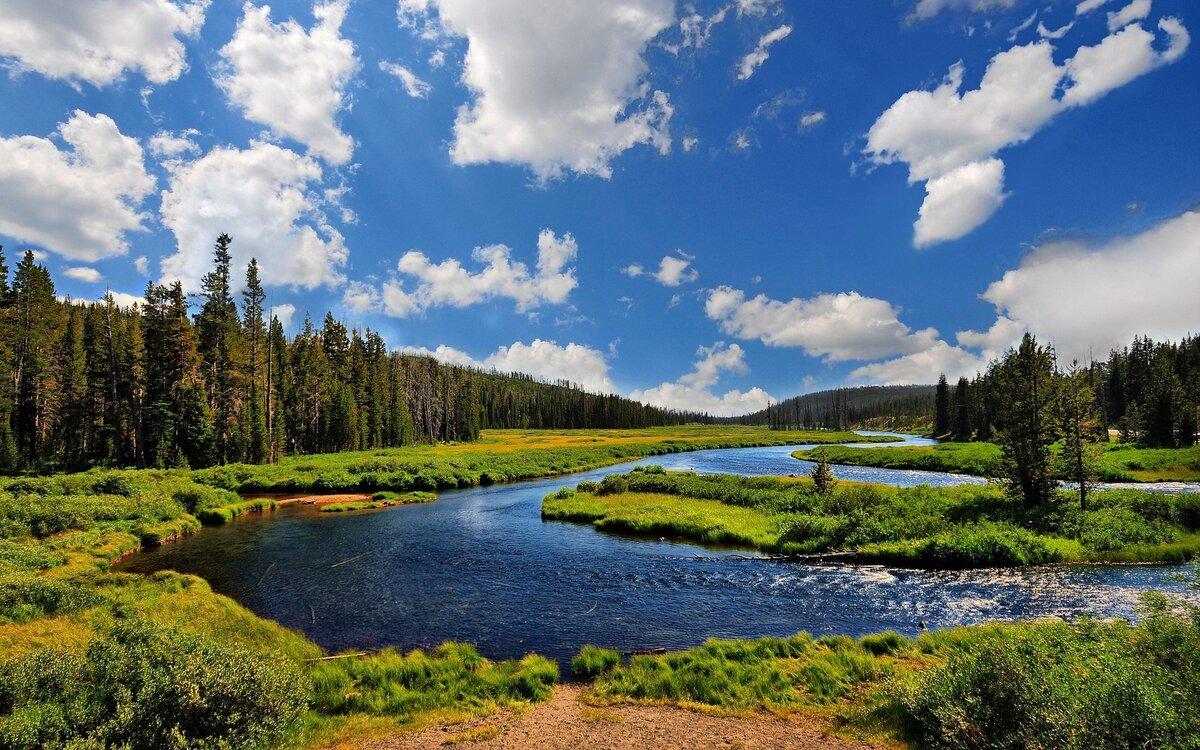 Картинка берег реки с травой