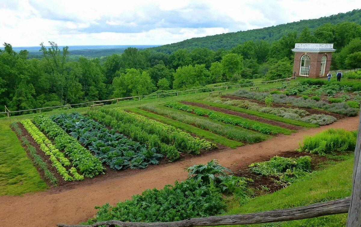 красивый огород с картинками картофеля под