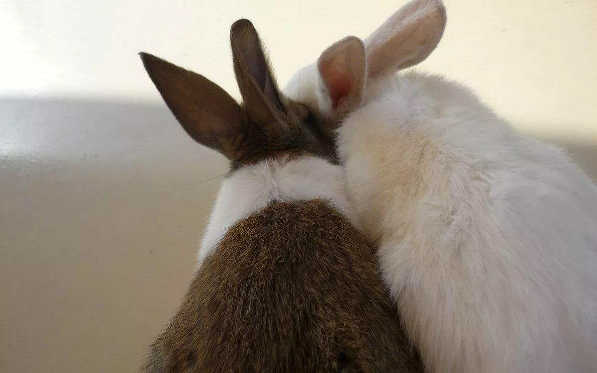 Картинка влюбленный кролик