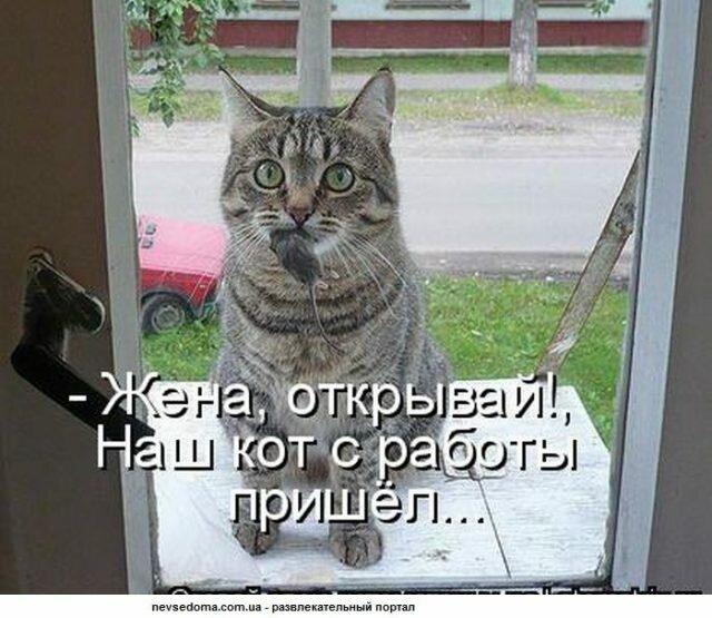 Прикольные картинки кошками с надписями ржачные