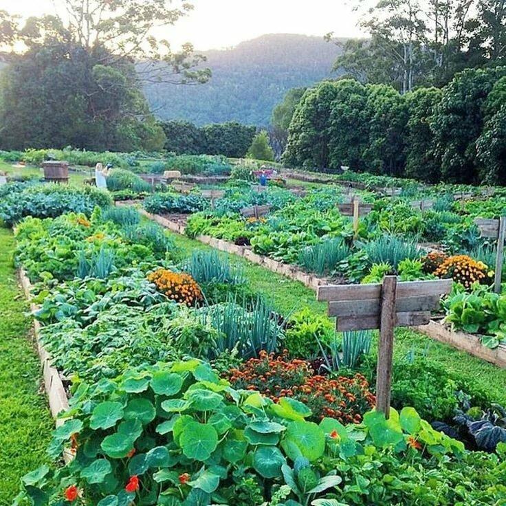 отлично дизайн огорода фото с посадками овощей порок