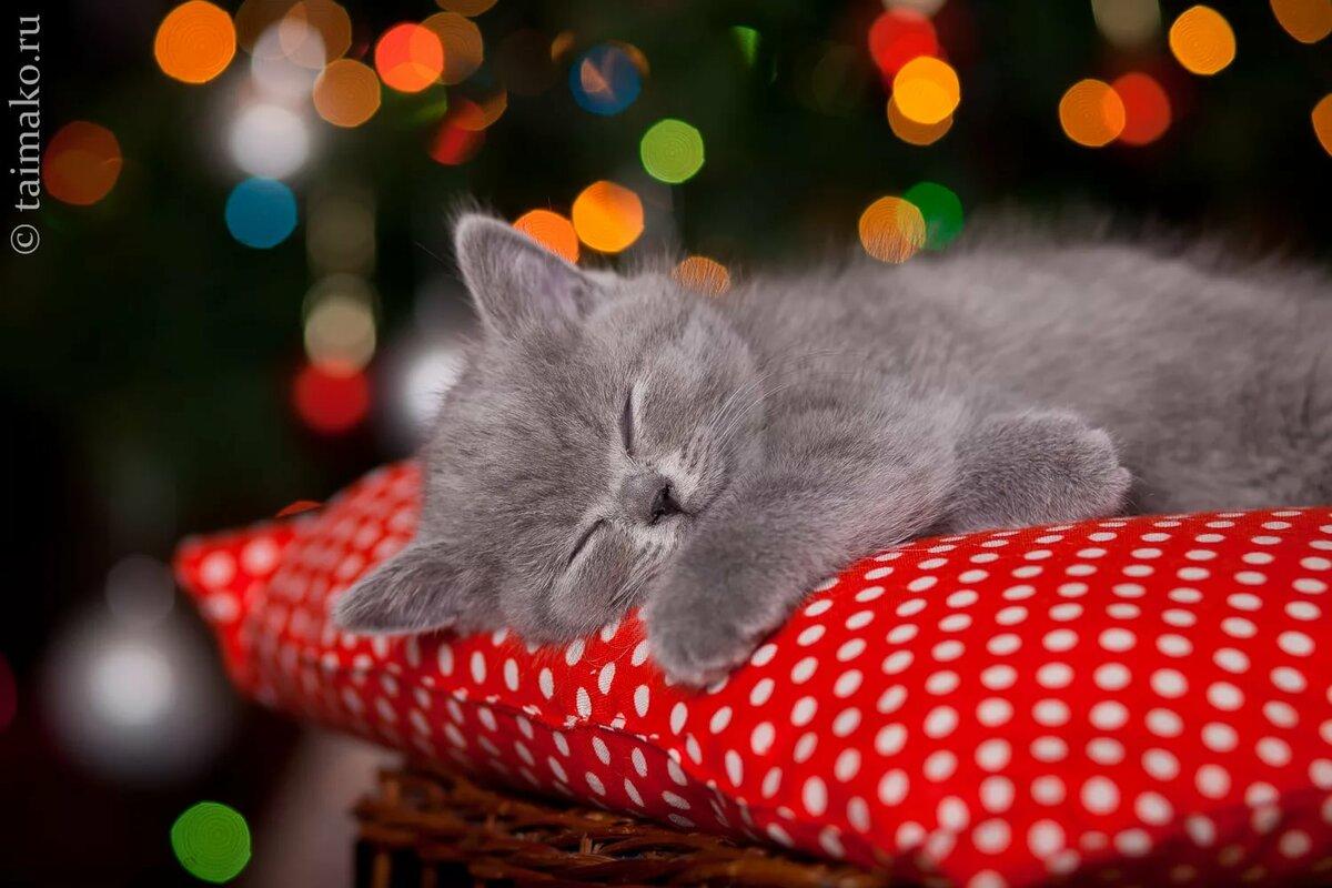 неё картинка спящего котенка что еще может
