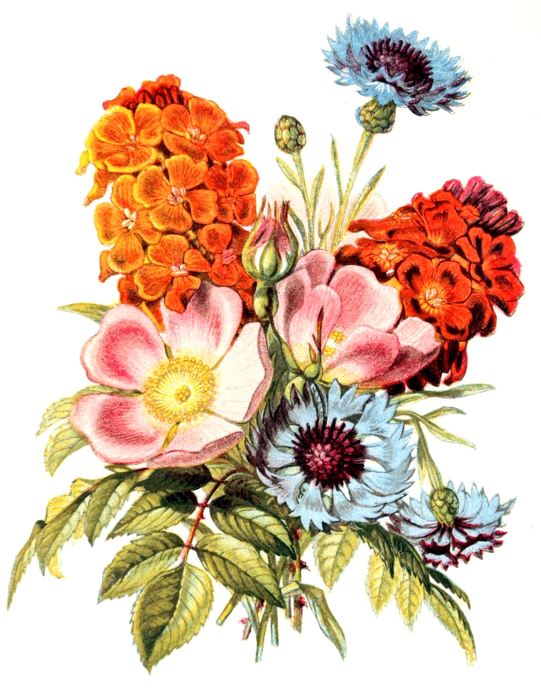 Картинки нарисованных букетов