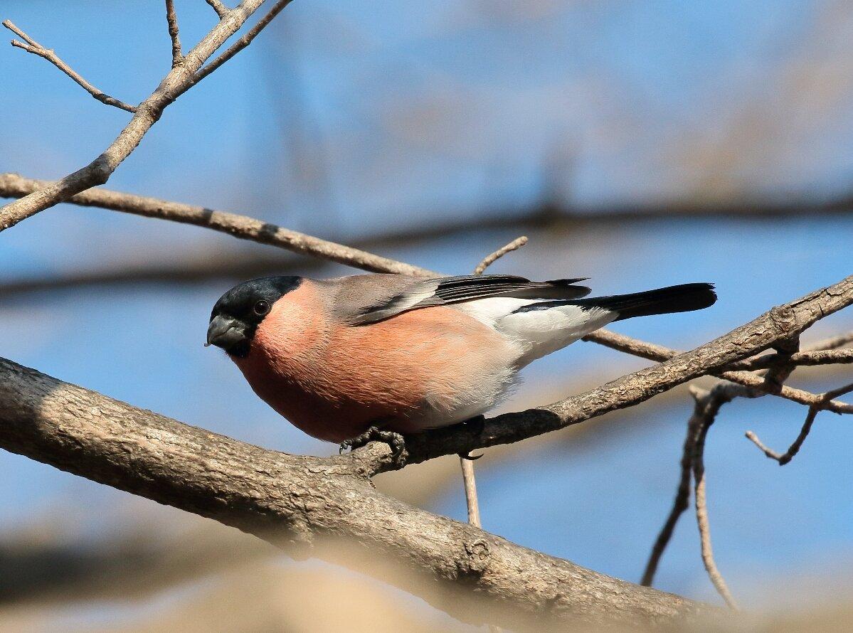 союз порода весенних птиц с фото россия это было