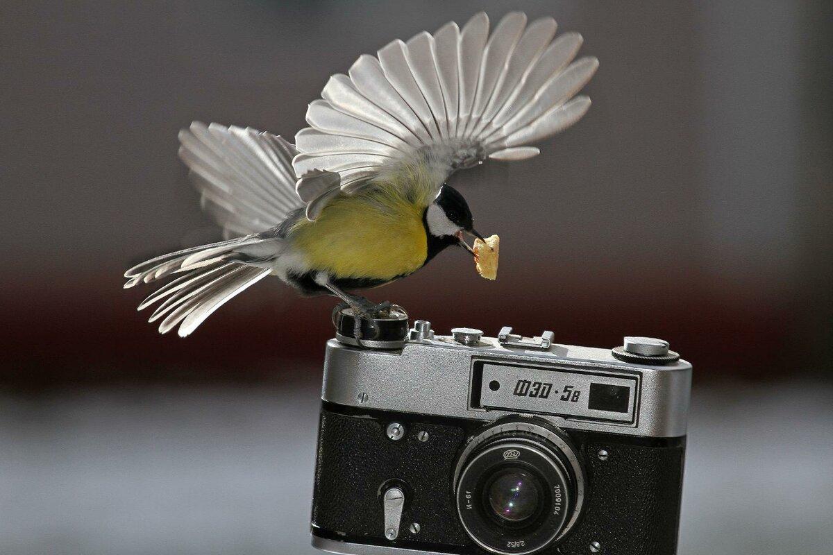 Поздравление с днем фотографа картинки