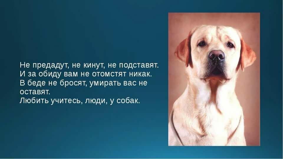 Стихи про лучшего друга собаку