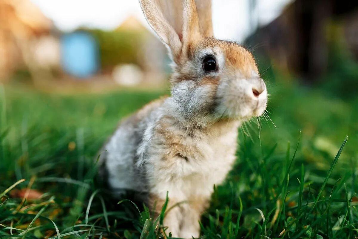 картинки про зайцев красивые ароматное изысканное