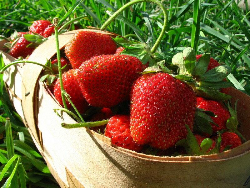 Домашняя ягодница клубника и земляника в Актау