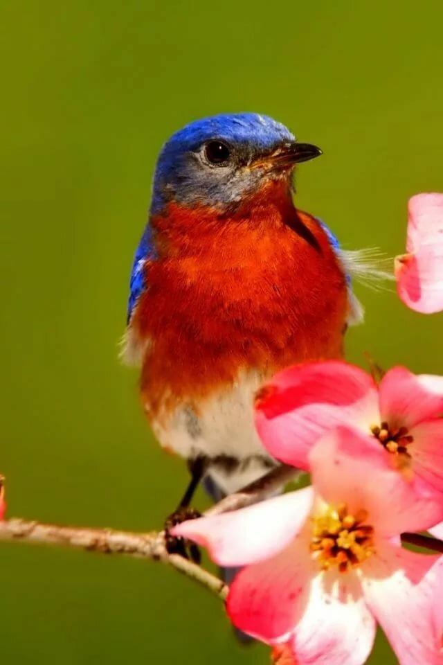 хаус это птицы фото для смартфона для редактирования