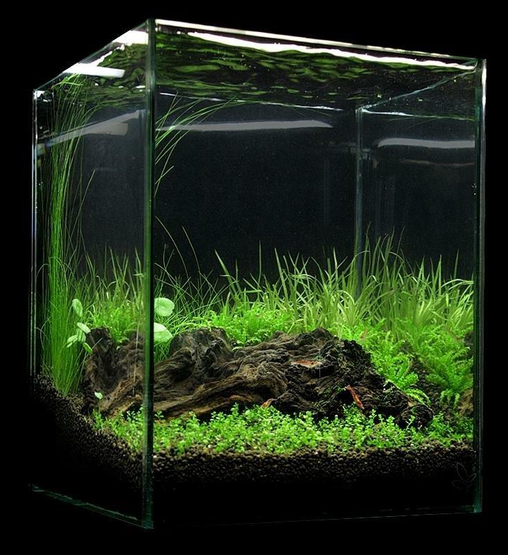 предназначен нано аквариум картинки будит