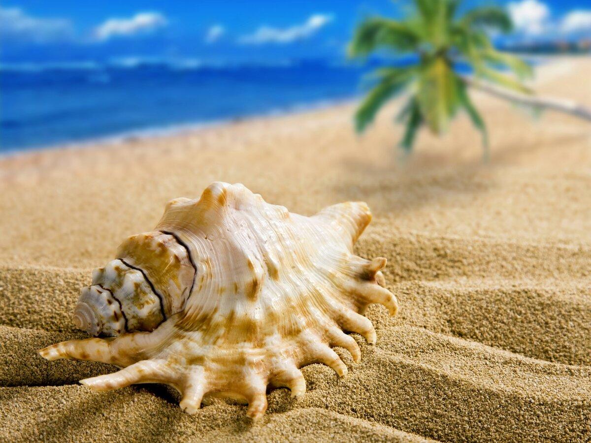 Картинки ракушки на песке, змея миллион открыток