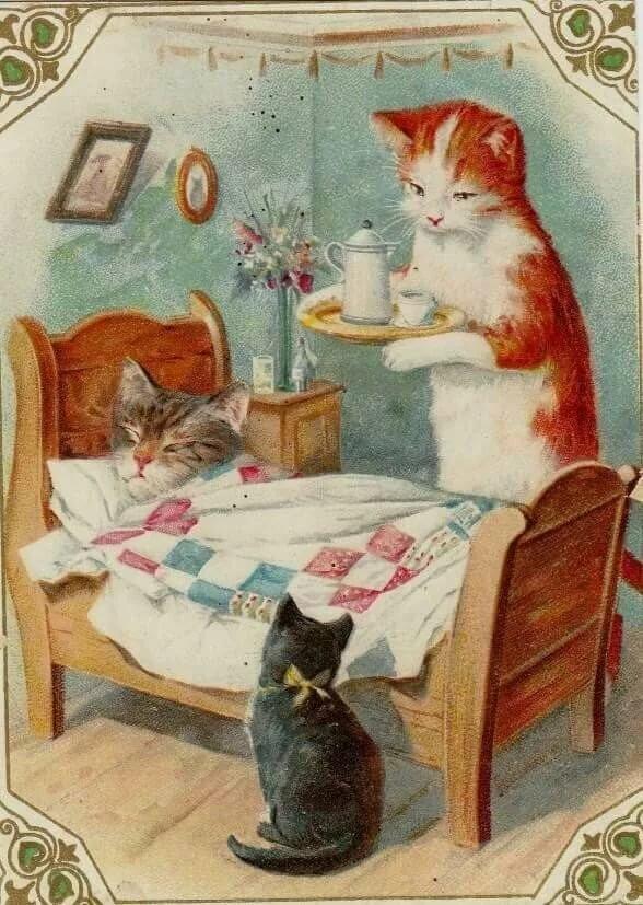 выздоравливай кошка картинки напечатанные