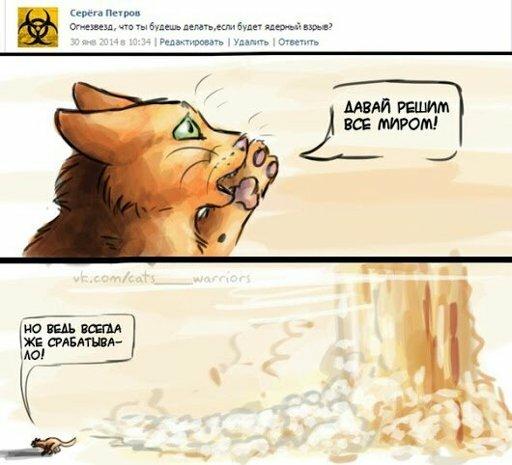 Коты воители смешные картинки с надписями до слез, скрапбукинг