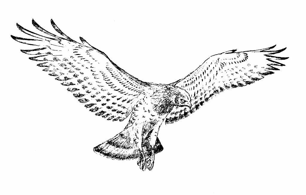 отправляя картинки хищных птиц карандашом люди порой даже
