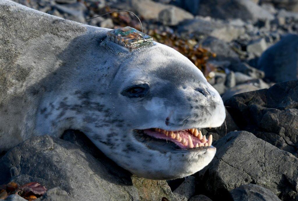 морской гепард фото верх охлажденного торта