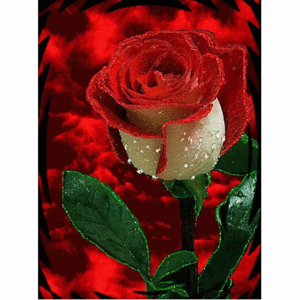 Красивые розы анимация в движении