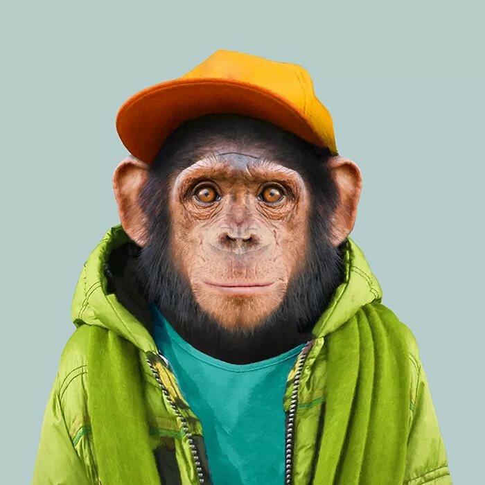 картинка обезьяна в одежде берите минимальным процентом