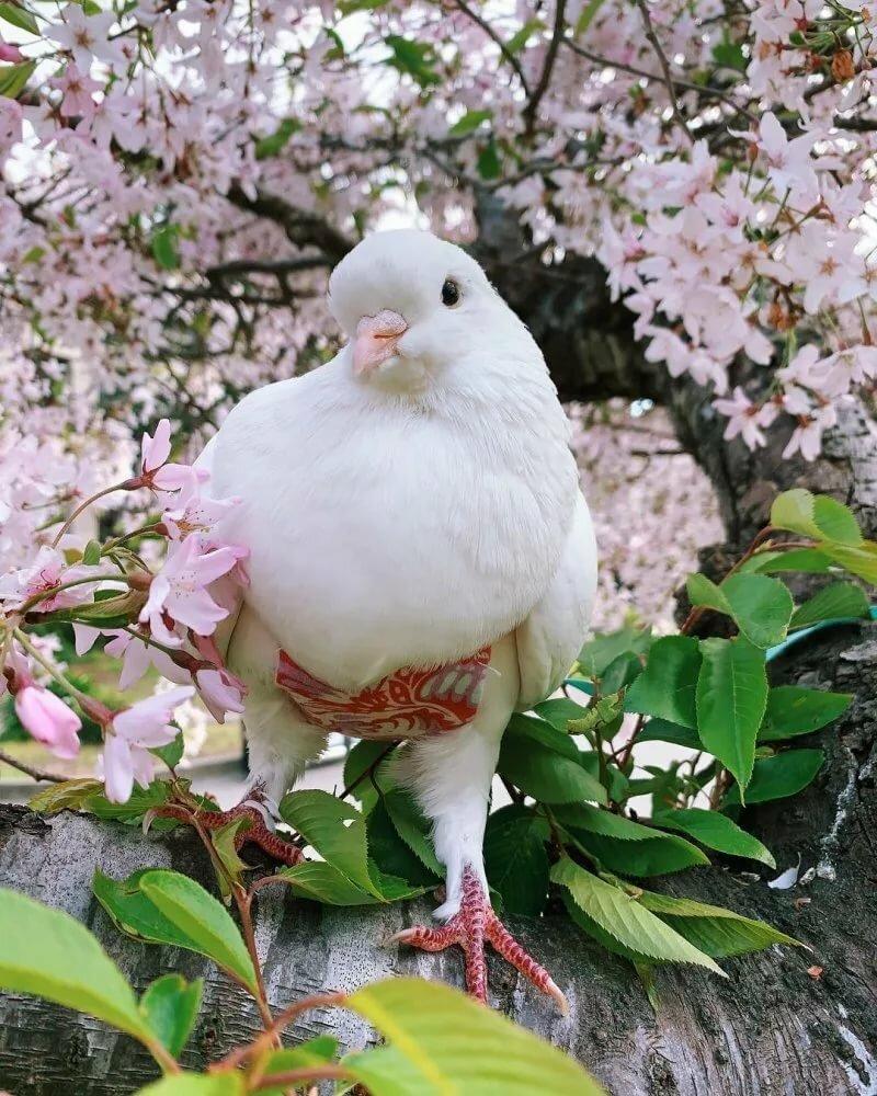 Картинки красивых голубей белых