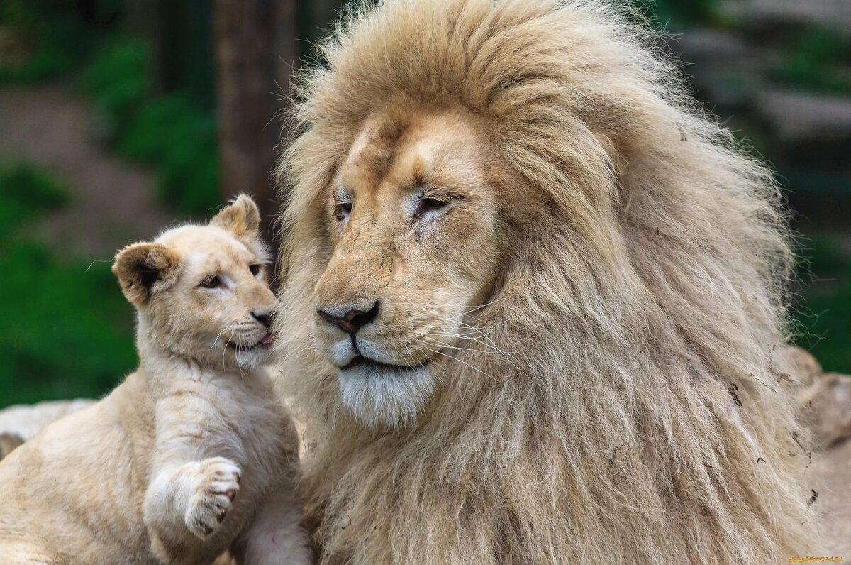 узнаете картинка львенок с папой екатерина российском троне