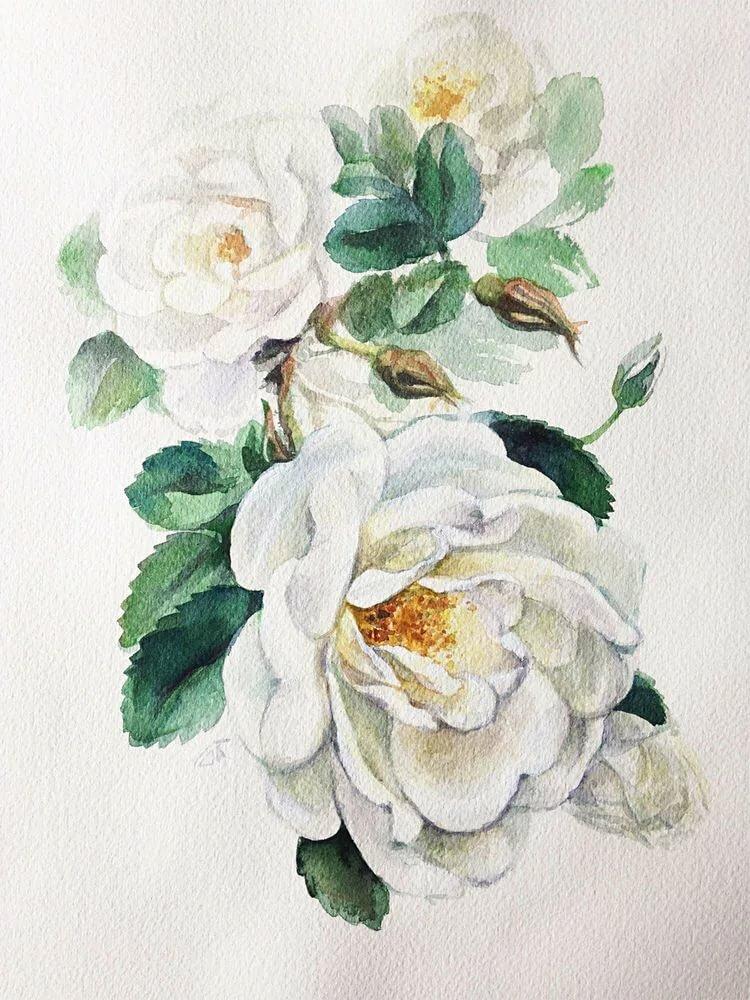 Белые розы рисунок