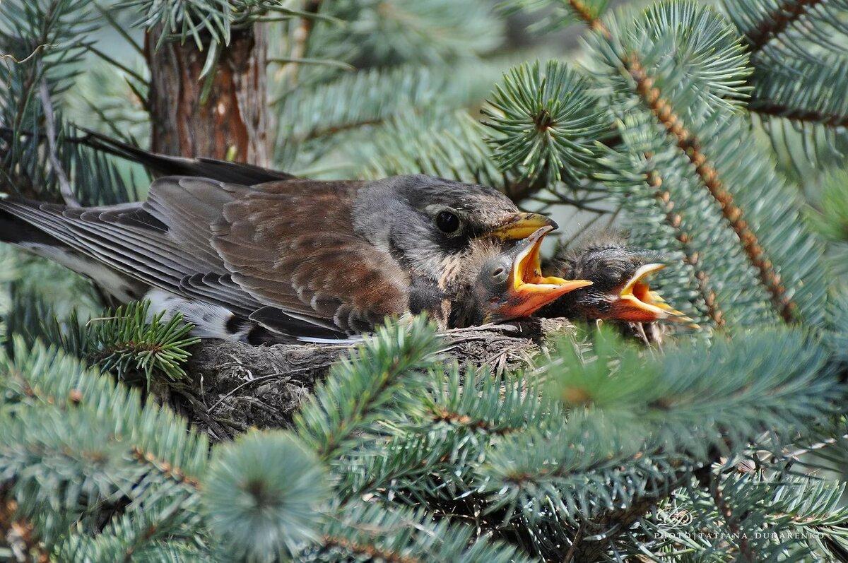 птицы фото урала детишкам