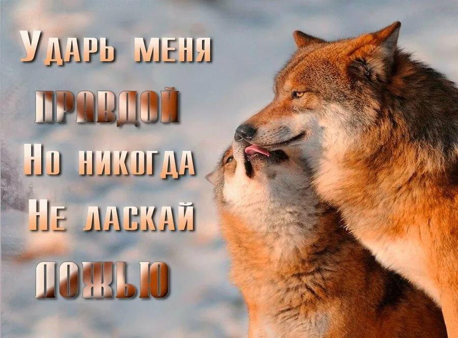 картинки с надписью о волках блюдце начинается буря