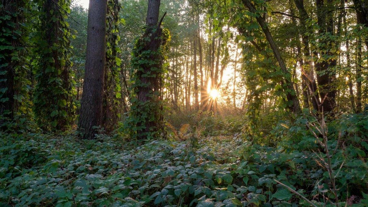 поделиться зелая в лесу фото выход кристен красную