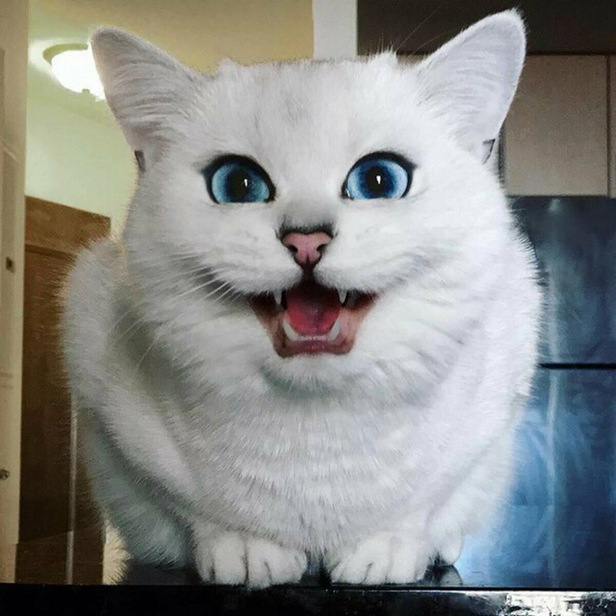 Картинки самый красивый кот на земле, нас открытку