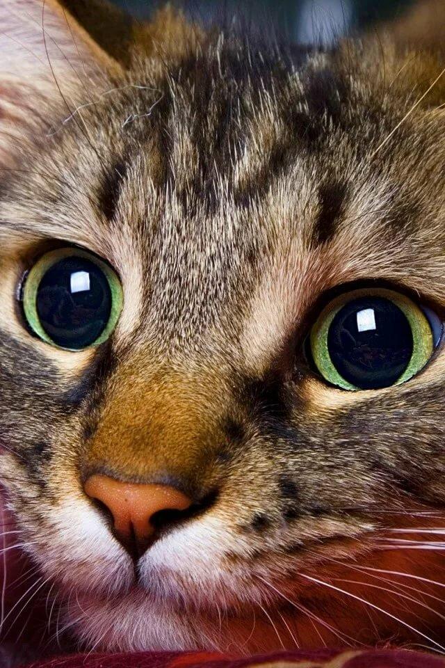 неприхотлив, картинка про кота с глазами эти