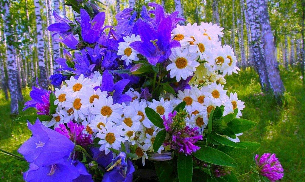 Открытки доброе утро и прекрасного дня с луговыми цветами многие