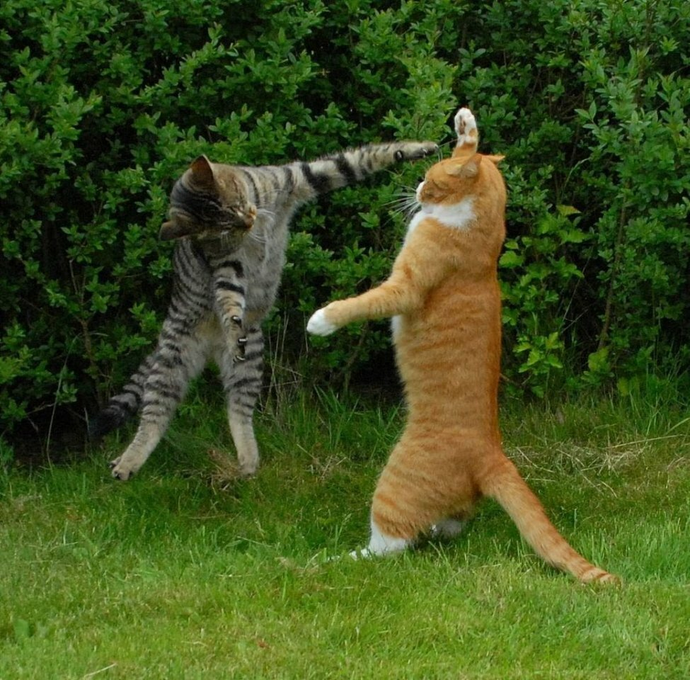 Приколы о кошках в картинках
